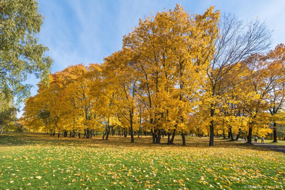 Царицыно - золотая осень 2019 - 144.jpg