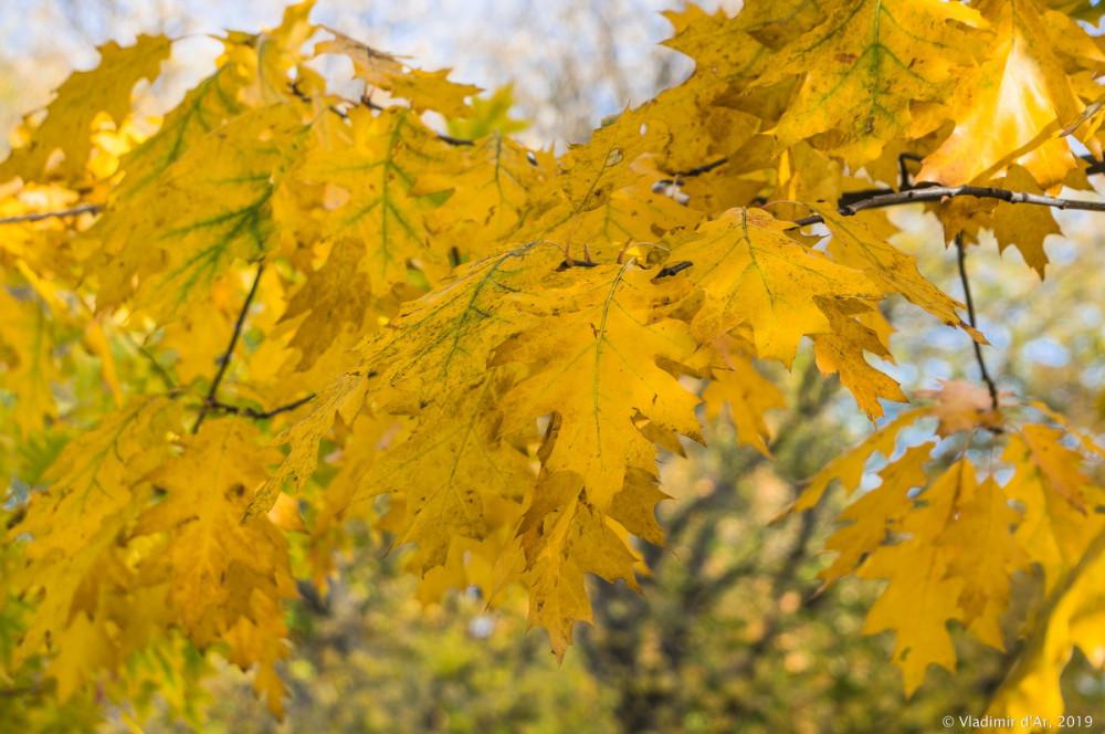 Царицыно - золотая осень 2019 - 145.jpg