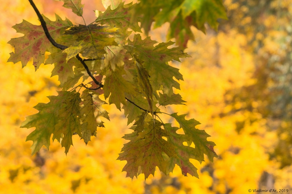 Царицыно - золотая осень 2019 - 148.jpg