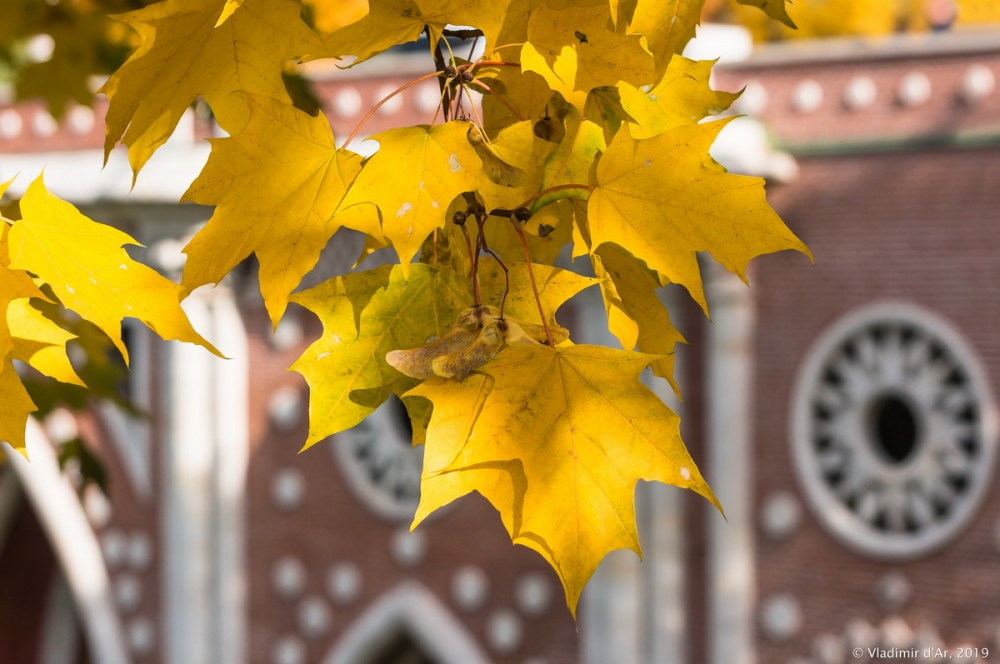 Царицыно - золотая осень 2019 - 150.jpg