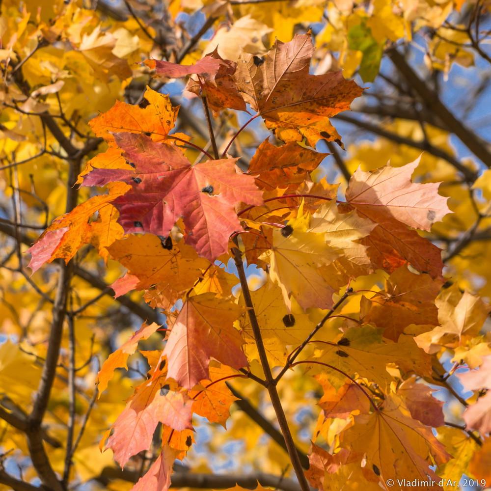 Царицыно - золотая осень 2019 - 155.jpg