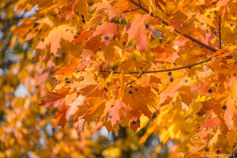 Царицыно - золотая осень 2019 - 156.jpg