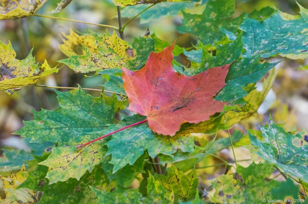 Царицыно - золотая осень - 185.jpg