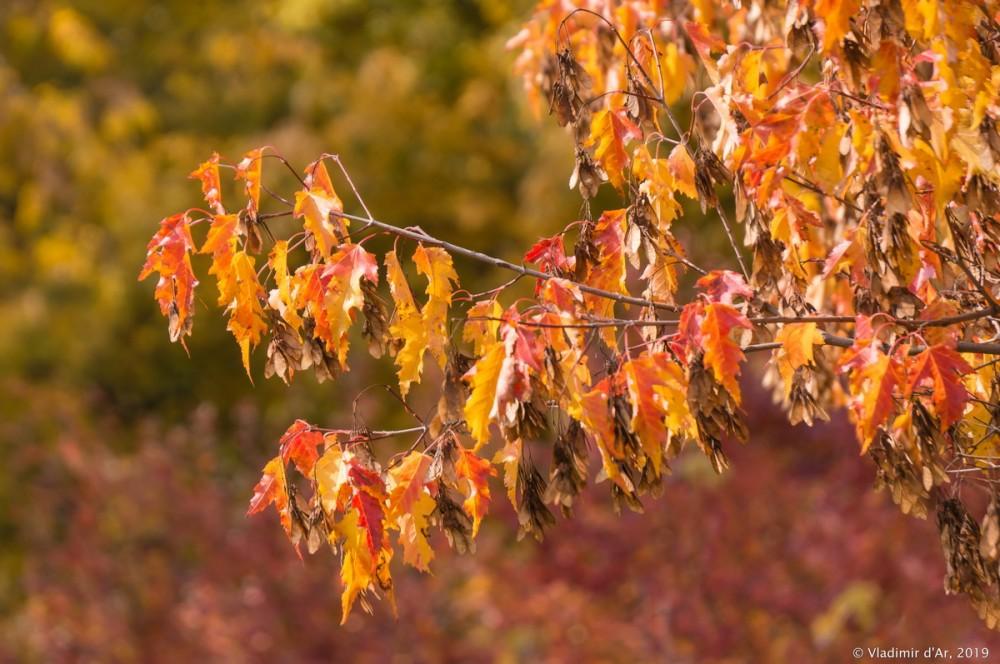 Царицыно - золотая осень - 204.jpg