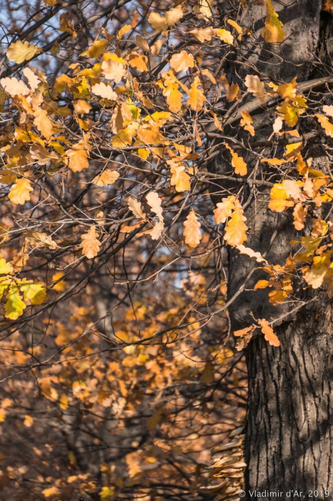 Коломенское - золотая осень - 19.jpg