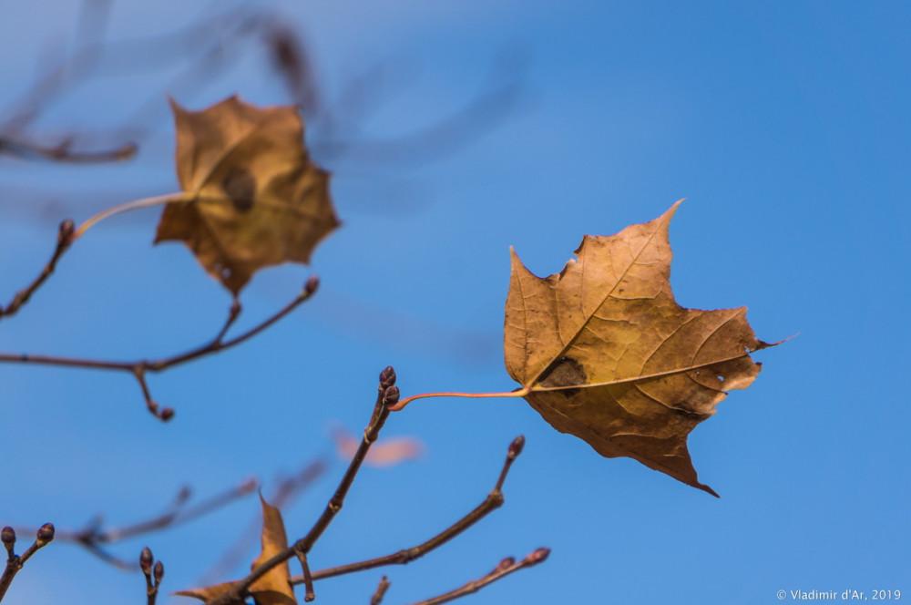 Коломенское - золотая осень - 33.jpg