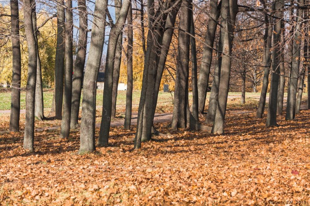 Коломенское - золотая осень - 37.jpg