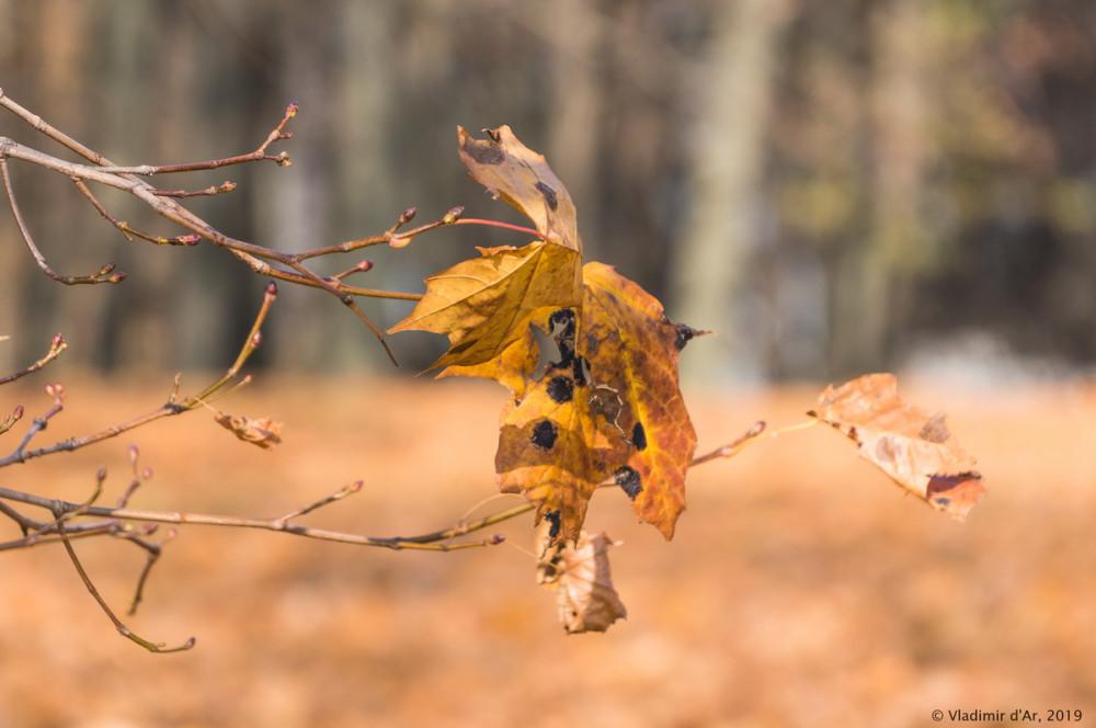 Коломенское - золотая осень - 38.jpg