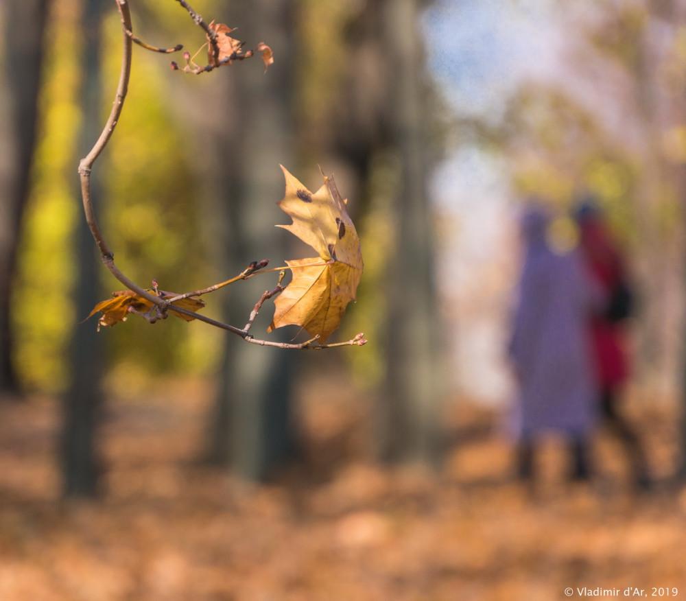 Коломенское - золотая осень - 39.jpg