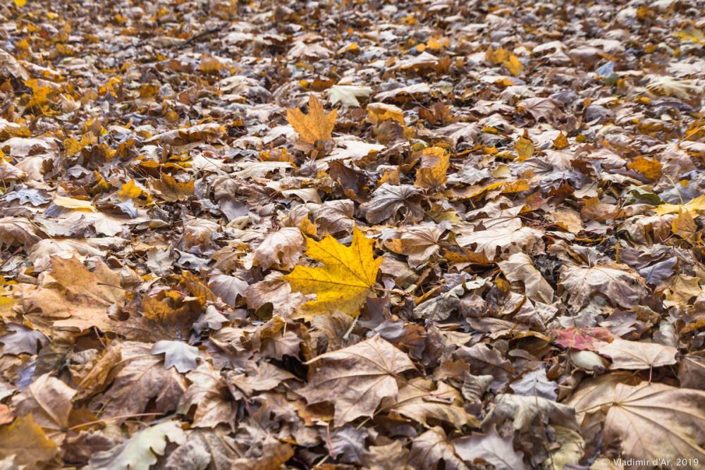Коломенское - золотая осень - 42.jpg