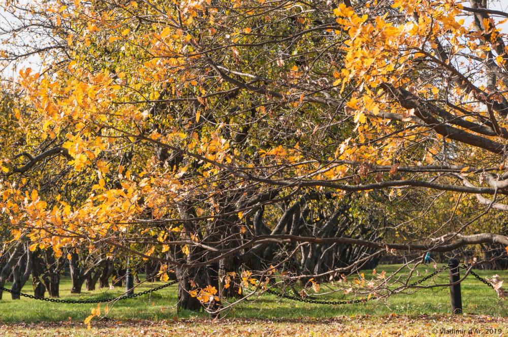 Коломенское - золотая осень - 48.jpg