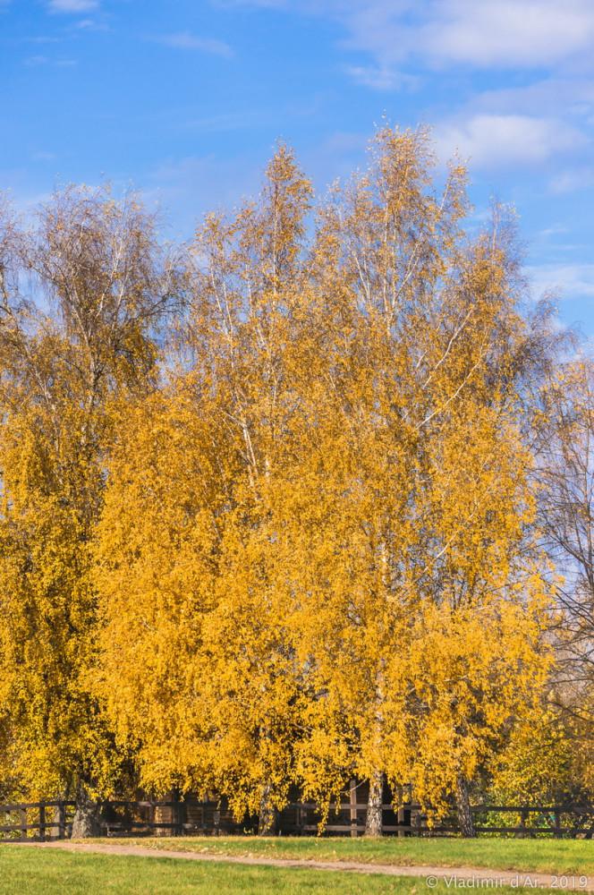 Коломенское - золотая осень - 49.jpg