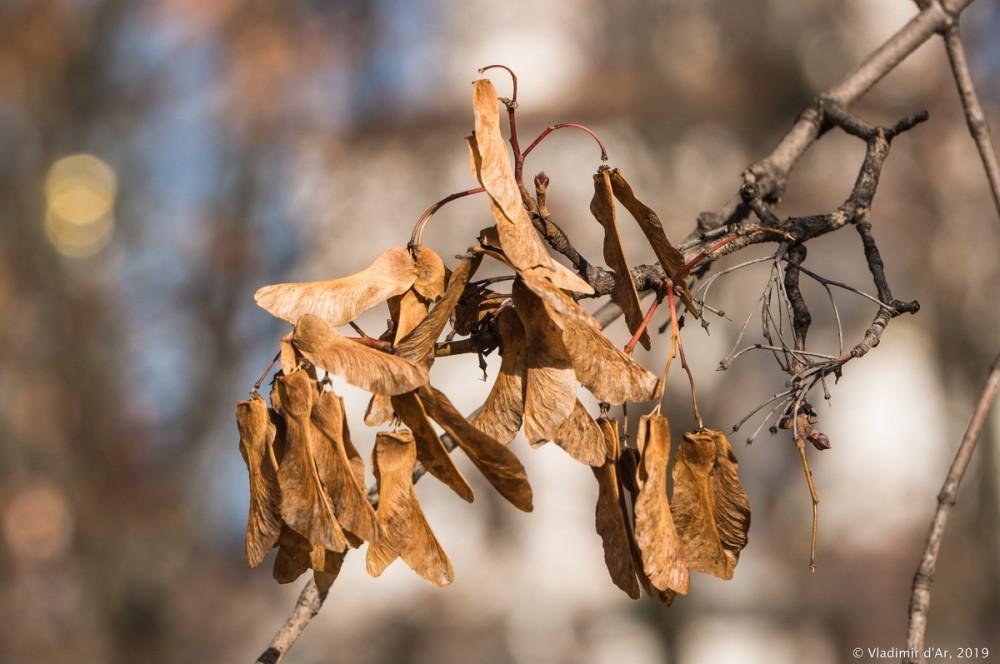 Коломенское - золотая осень - 56.jpg
