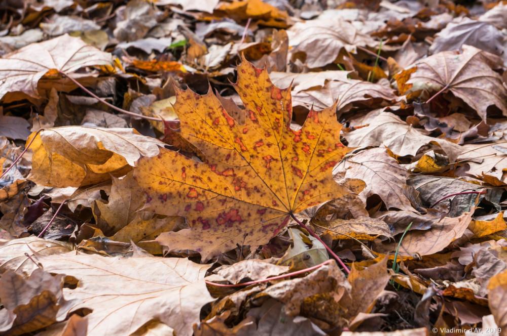 Коломенское - золотая осень - 59.jpg