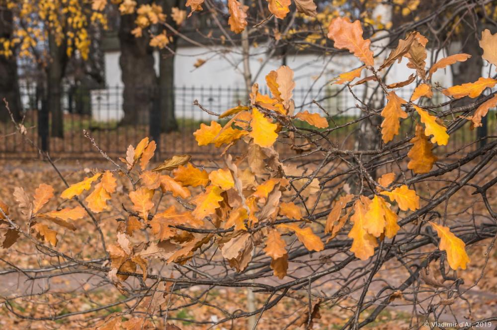 Коломенское - золотая осень - 69.jpg