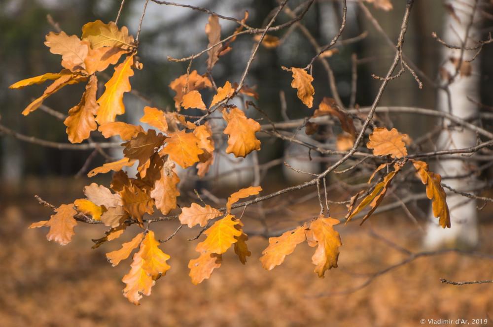 Коломенское - золотая осень - 70.jpg