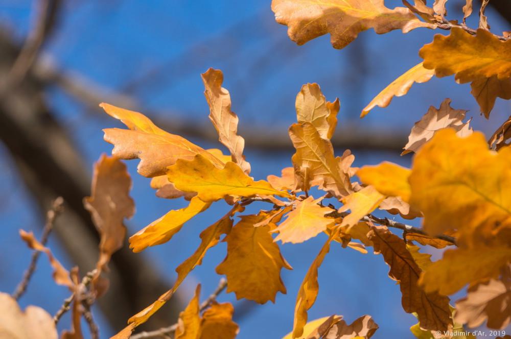 Коломенское - золотая осень - 74.jpg
