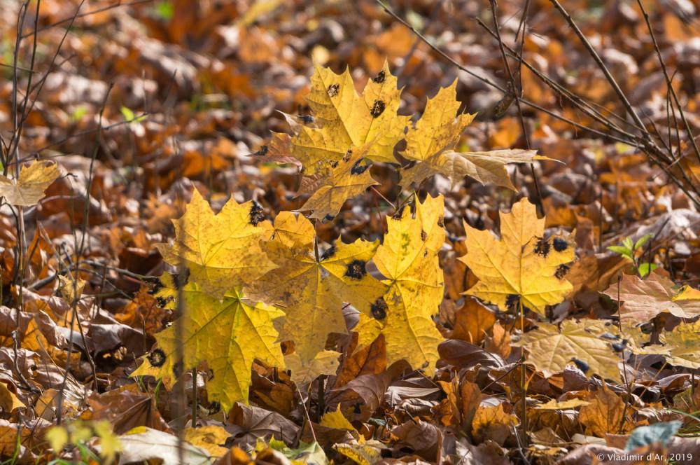 Коломенское - золотая осень - 77.jpg