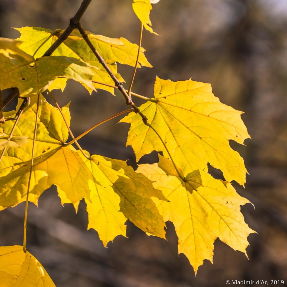 Коломенское - золотая осень - 87.jpg