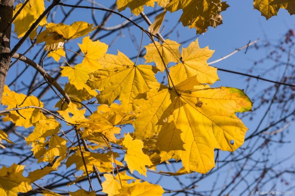Коломенское - золотая осень - 88.jpg