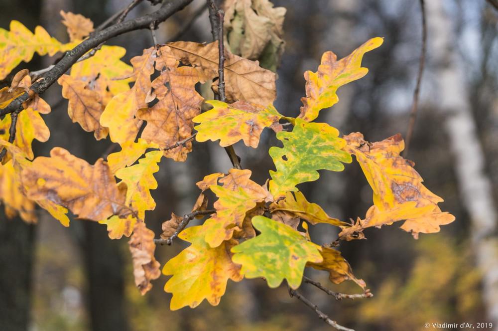 Коломенское - золотая осень - 107.jpg