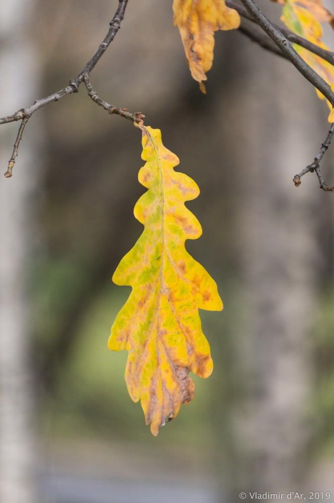Коломенское - золотая осень - 108.jpg