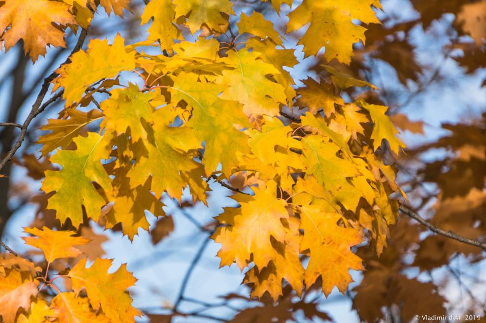 Коломенское - золотая осень - 110.jpg