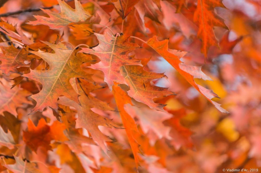 Коломенское - золотая осень - 111.jpg