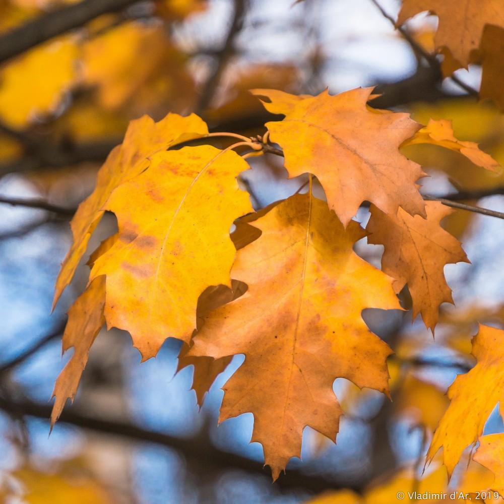 Коломенское - золотая осень - 112.jpg