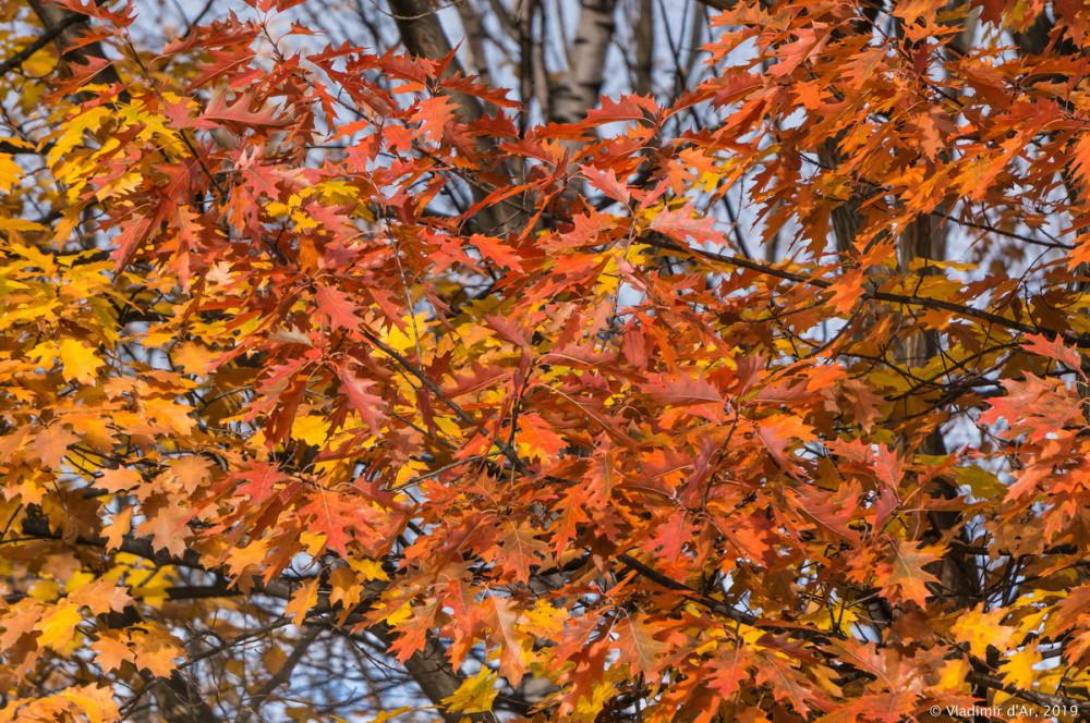 Коломенское - золотая осень - 113.jpg