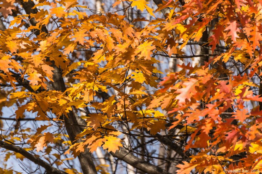 Коломенское - золотая осень - 114.jpg