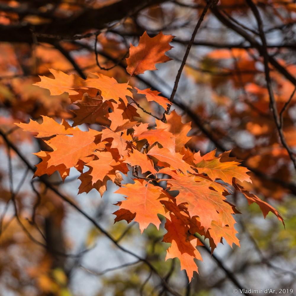 Коломенское - золотая осень - 115.jpg