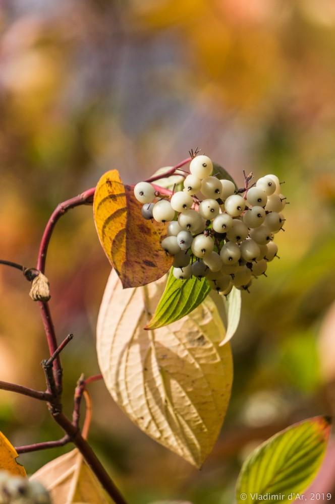 Коломенское - золотая осень - 116.jpg