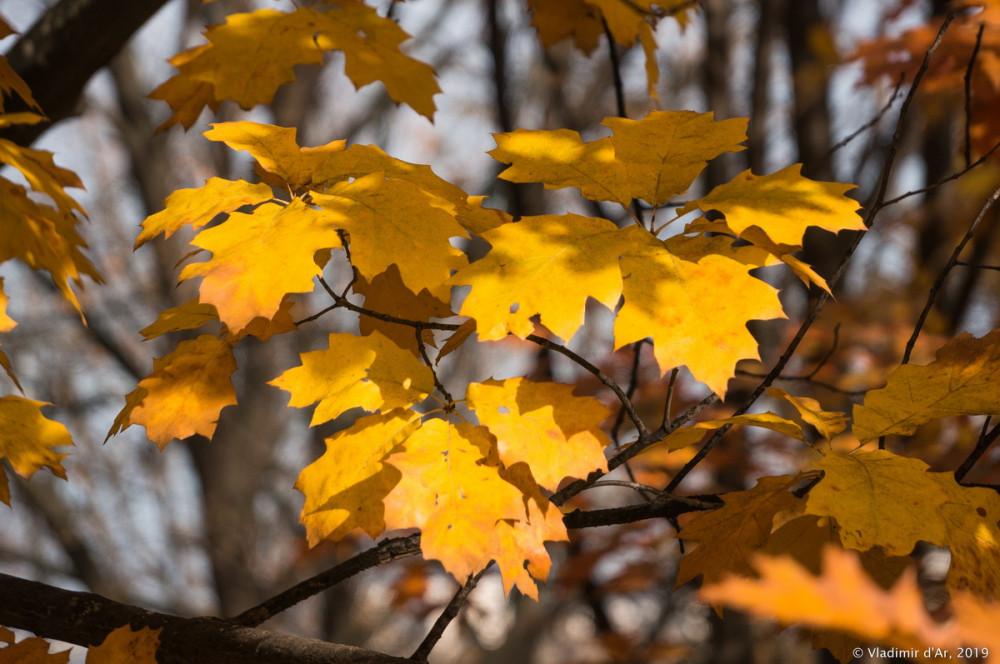 Коломенское - золотая осень - 117.jpg