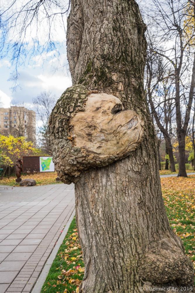 Усадьба Трубецких - парк - 13.jpg