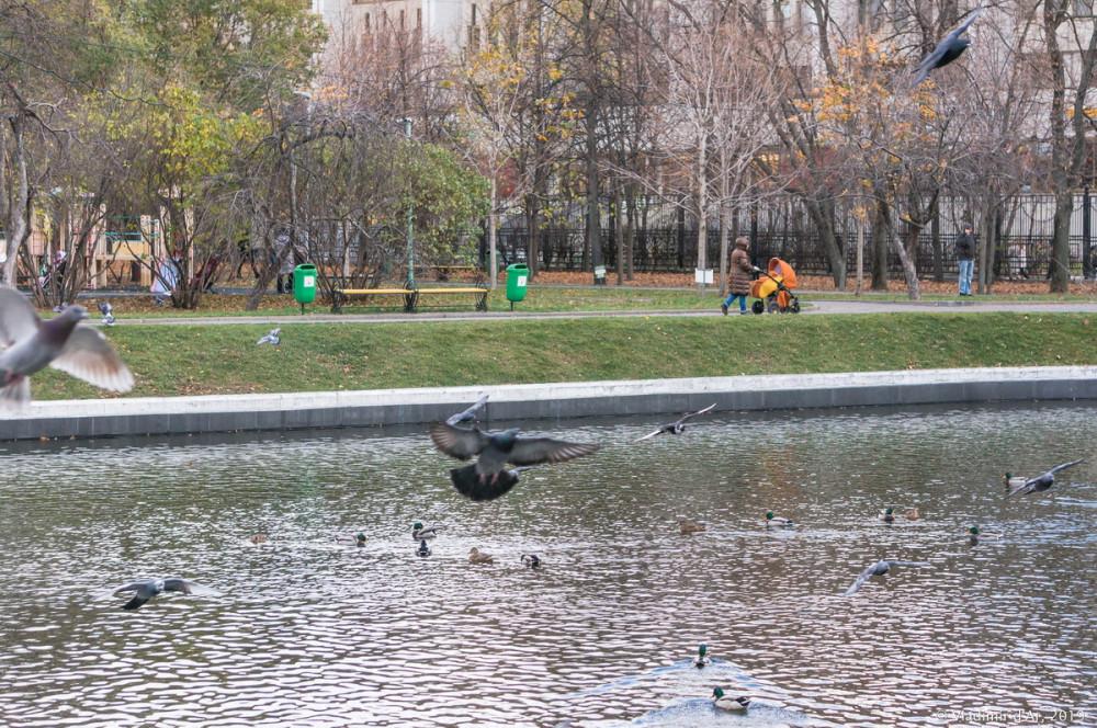 Усадьба Трубецких - парк - 23.jpg