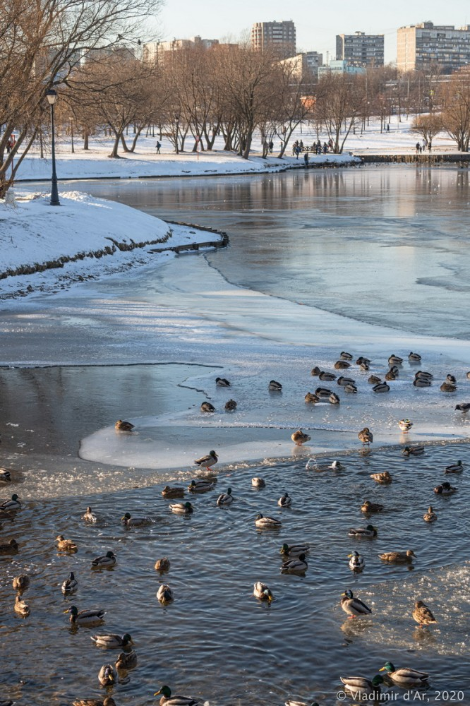 Царицыно - зима - 233.jpg