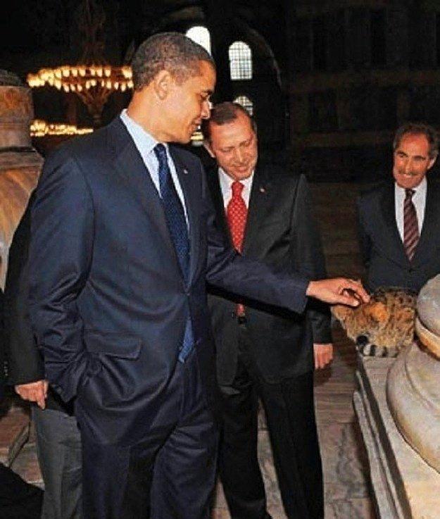 Кот Гли и Обама