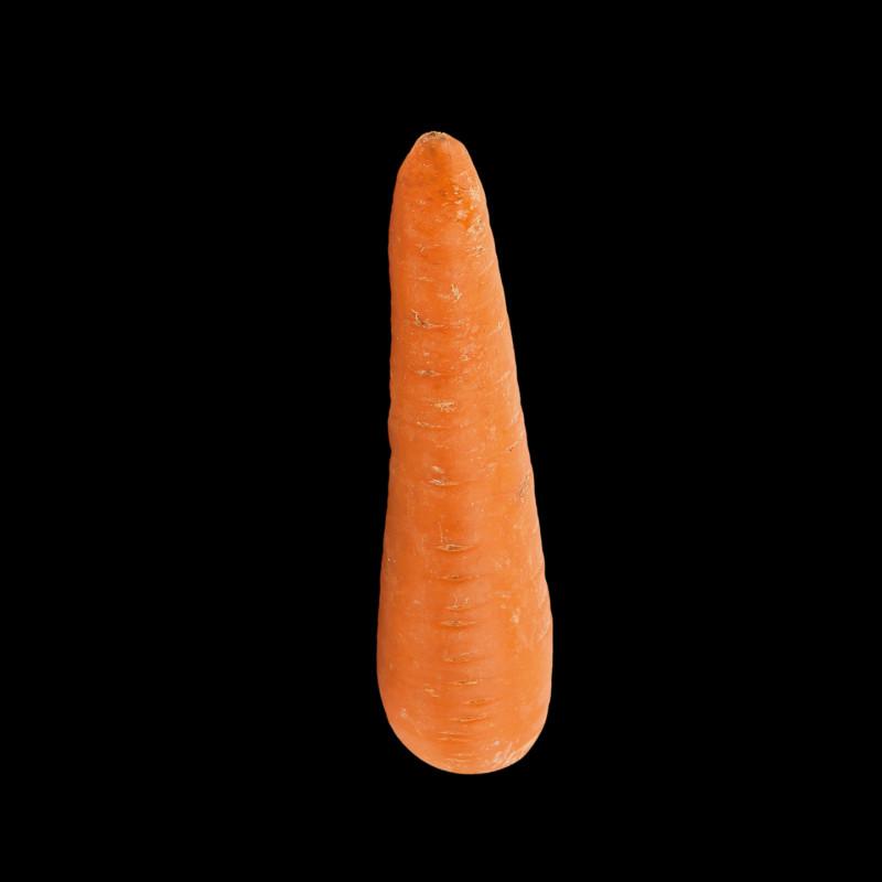 Морковь нормальная