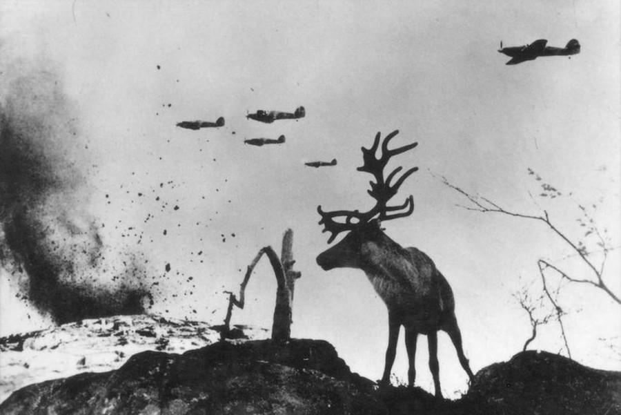 Олень Яша и война.