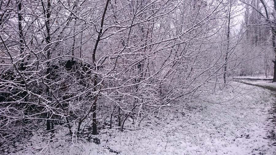 Снег в Новочеркасске