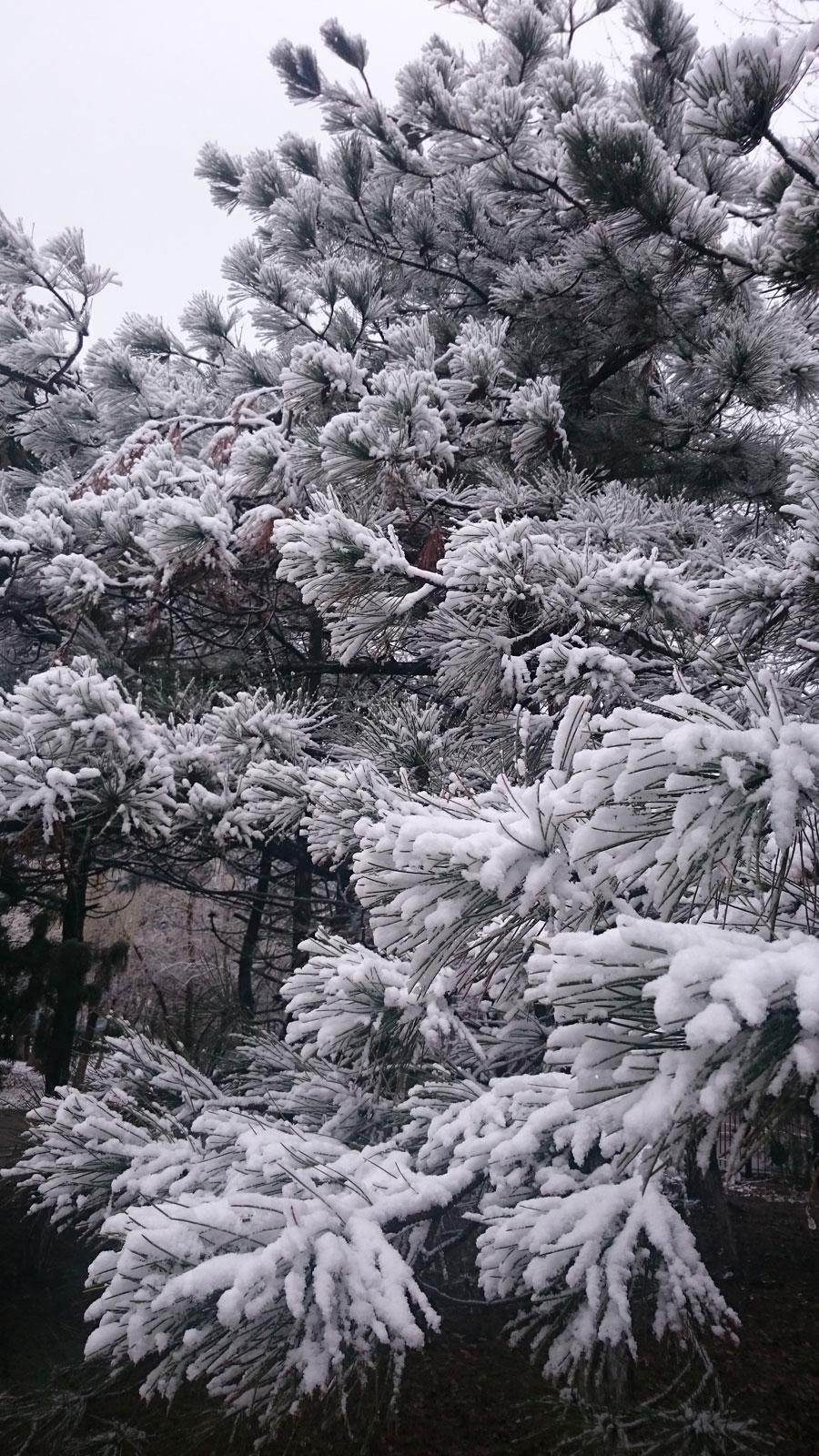 Весна в Новочеркасске