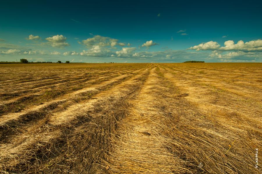 Белоруссия, Гомельская область. Льняные поля в радиоактивной полосе выселения