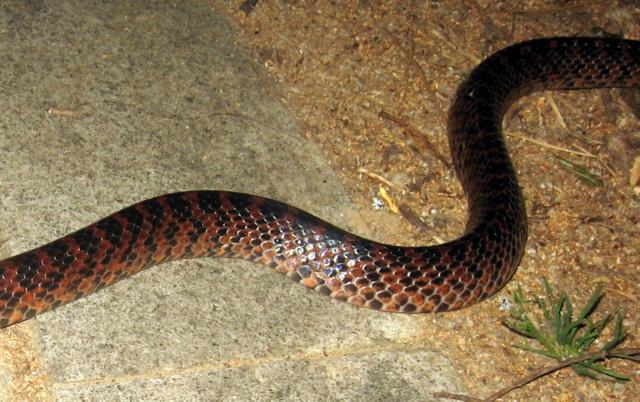 змея-3