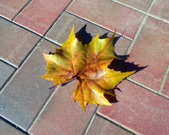 платановый лист