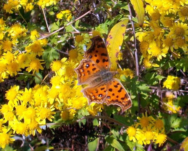 бабочка с расправленными крыльями