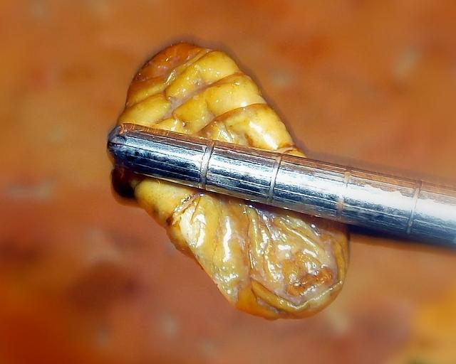 жареная личинка шелкопряда