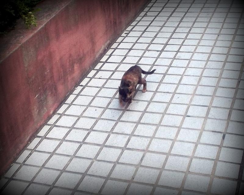 Пёстрый котёнок
