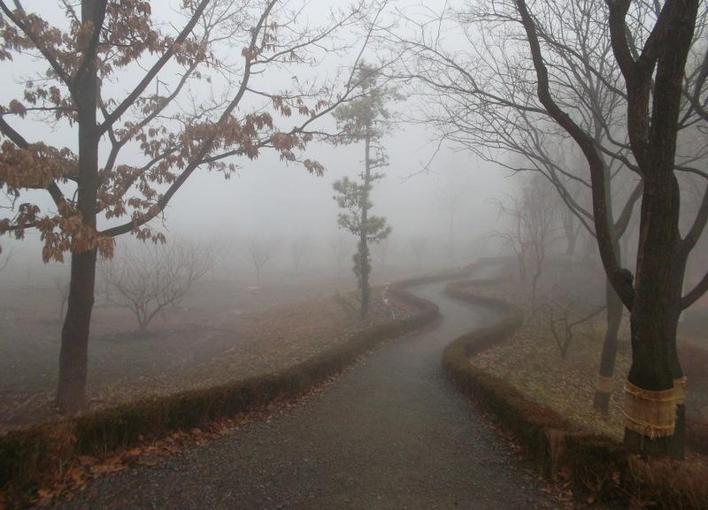 туман_1