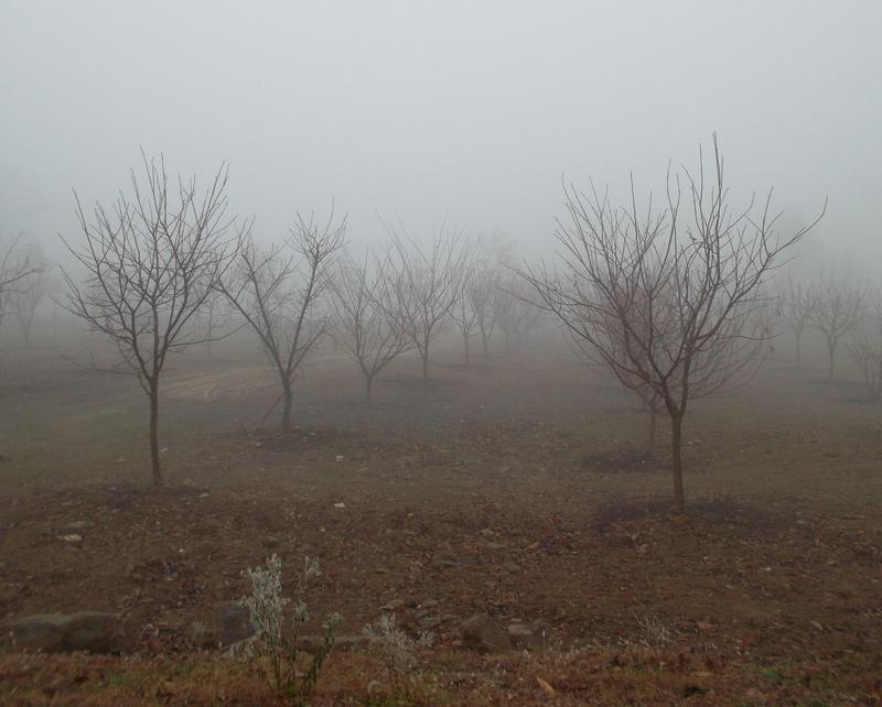 туман_2
